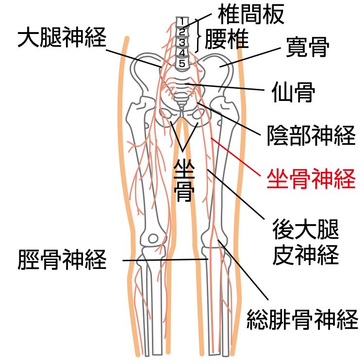 神経痛 原因 三叉